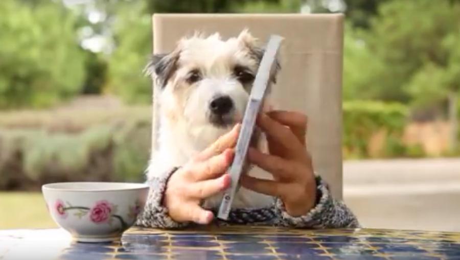 Hund liest ein Buch